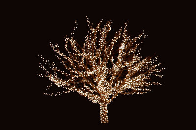 christmas lights on a deciduous tree