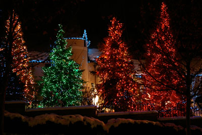 large pine trees decorated with christmas lights